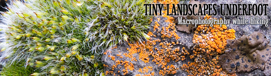 Tiny Landscapes Underfoot